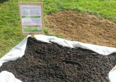 Semis de Carotte bac de Tannach